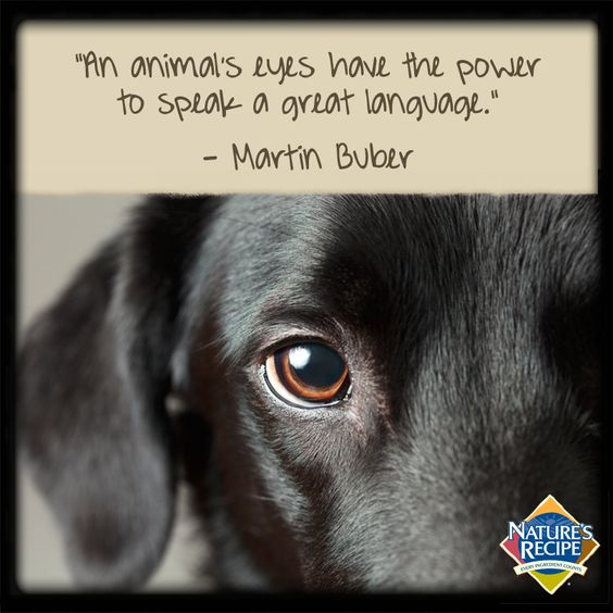 92 Famous Animal Quotes And Sayings About Saving Animals ...