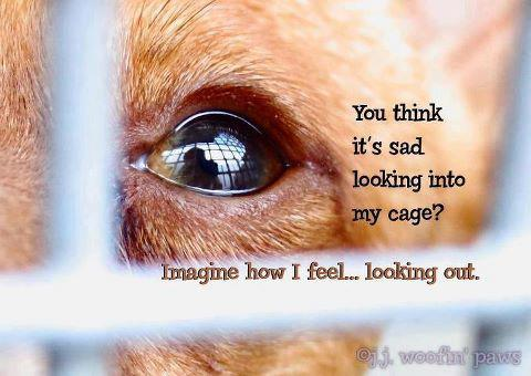 Animal Cruelty Quotes Endearing 204 Animal Quotesquotesurf