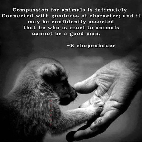 92 Great Animal Quotes And Sayings About Animals Parryz Com