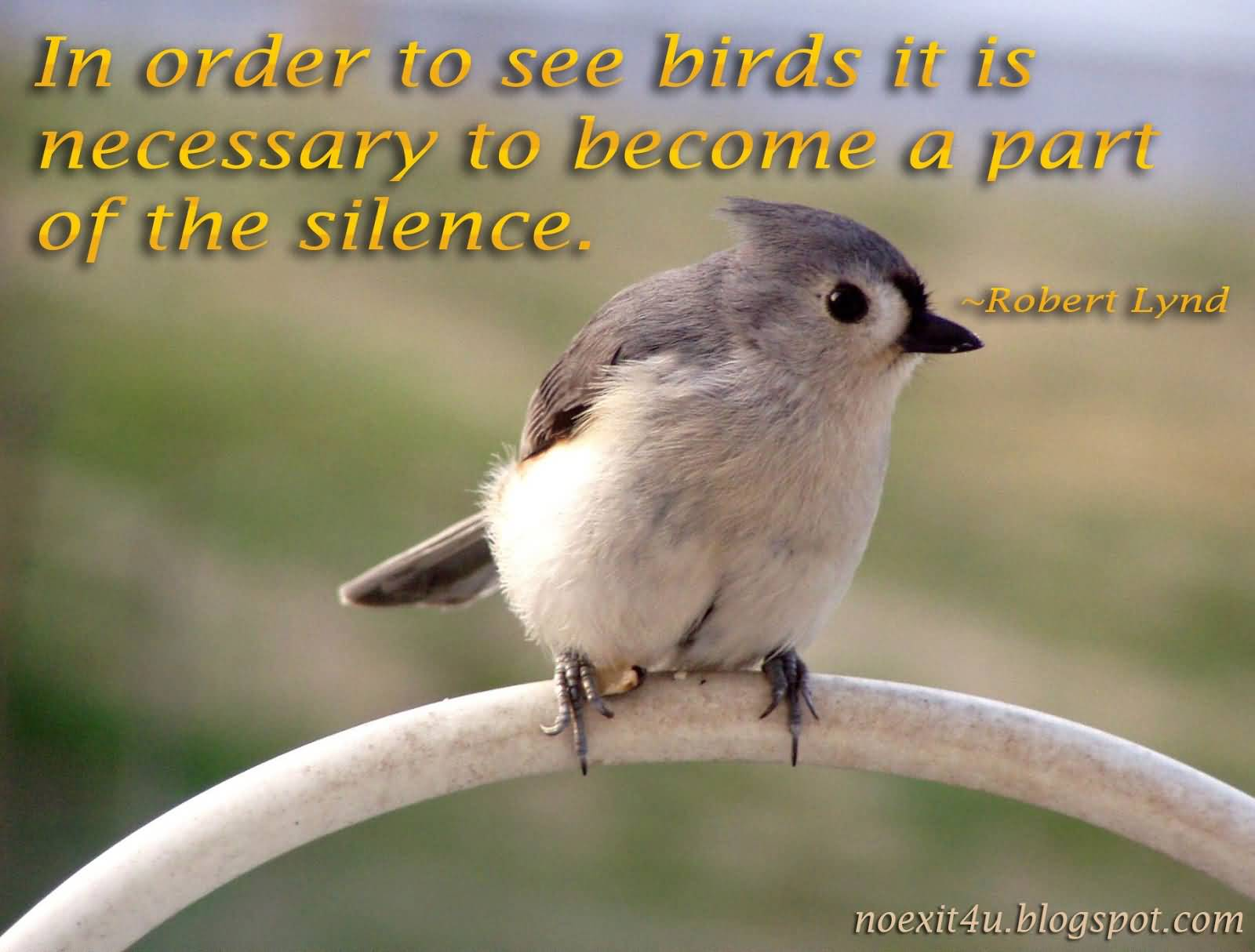 Birds Quotes 77 Beautiful Birds Quotes And Bird Sayings  Parryz