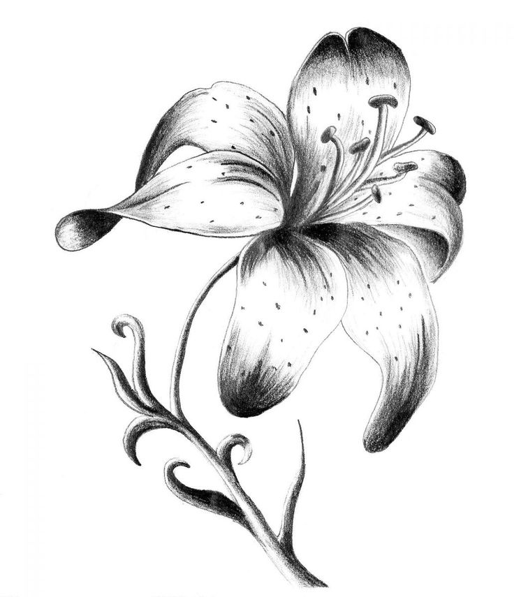 C60559a4d1 Cheapest Low Price Sale White Lily Tattoo Designs More